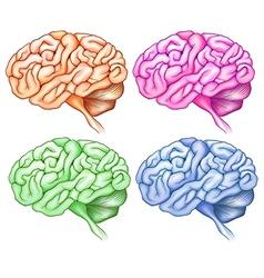 Human brains vector image