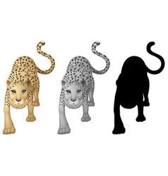 set of tiger character vector image