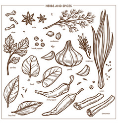 Spices and seasonings herbs sketch icons vector