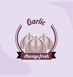 Vegetable garlic always fresh emblem vector
