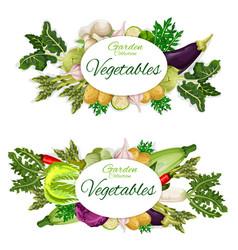 Vegetables harvest and garden groceries vector