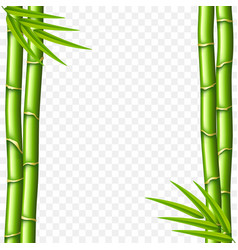 bamboo stems isolated on white vector image