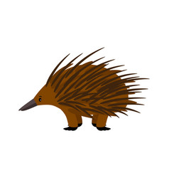 Echidna cute echidna character on white vector
