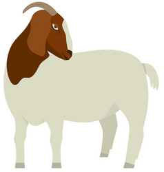 farming set white and brown boer goat vector image