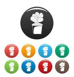 house cacti pot icons set color vector image