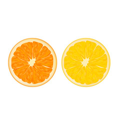 Orange and lemon realistic style vector