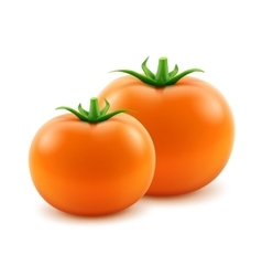 Orange fresh whole tomatoes on background vector