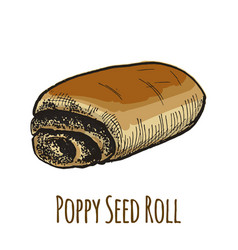 poppy seed roll sweet bun vector image