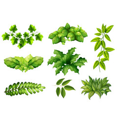 set of nature plant vector image
