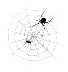 Spider with fly vector