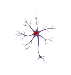 structure of neuron nerve cell anatomy and vector image