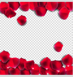 abstract natural rose petals on transparent vector image