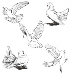 doves silhouette vector image vector image