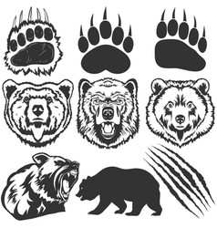 Bear footprint with claw scratches vector