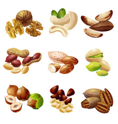 cartoon healthy nuts set vector image