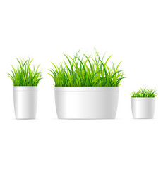 realistic detailed 3d grass houseplant set vector image