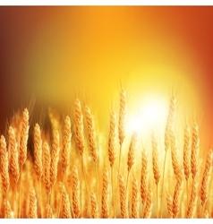 Wheat ears 20161226 2 vector