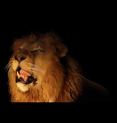 lion on black vector image vector image