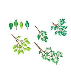 Brushes with branches and leaves vector