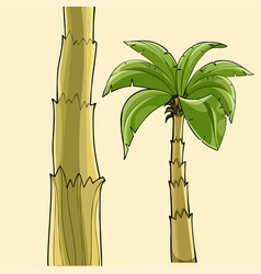 Cartoon banana palm tree without fruit and the vector