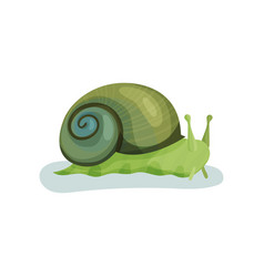 Green snail gastropod mollusk with green shell vector