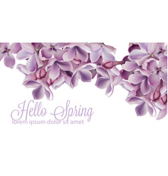 hello spring background with purple lilac flowers vector image