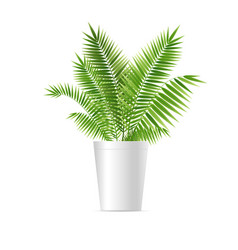 Realistic detailed 3d houseplant green palm vector