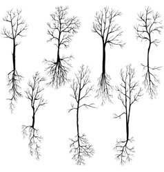 Set different winter trees and roots vector