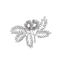 Single one line drawing beauty fresh mimosa vector