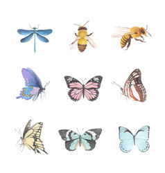 Various butterfly watercolor design vector