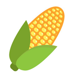 corn flat icon vegetable and mazie vector image