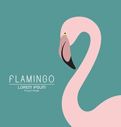 Flamingo design vector image