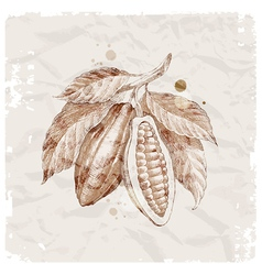 Hand drawn cocoa beans vector