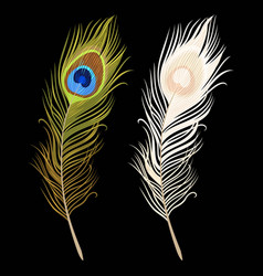 isolated peacock feathers vector image