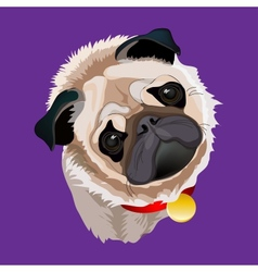 Portrait Of A Pug vector image
