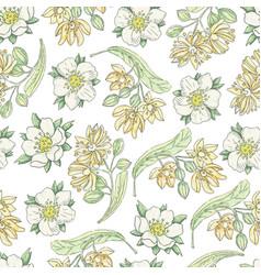 Tilia flowers 4 vector