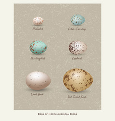 Variety of birds eggs vector