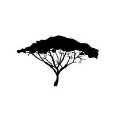 Acacia tree vector