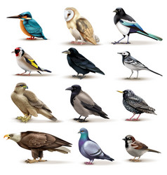 Birds realistic fauna collection vector