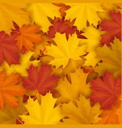 Fallen maple autumn leaves background vector
