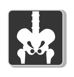 Human bones anatomy xray vector image