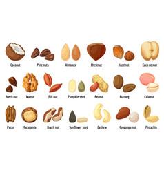 nut icons set cartoon style vector image