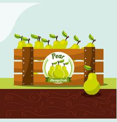 pear fruit always fresh in wood basket vector image