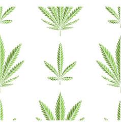 seamless texture green leaves marijuana in vector image
