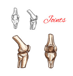 Sketch icon of human knee or elbow joints vector
