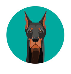 snout of noble doberman with dark smooth fur vector image