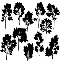 set of different trees with leaves vector image