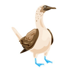 Blue footed booby icon cartoon style vector