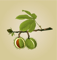 Chestnut tree conkers with leaves vintage vector