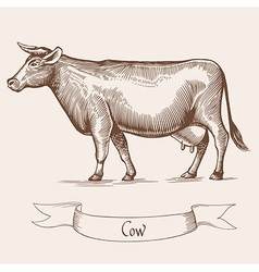 Cow in Vintage engraving vector
